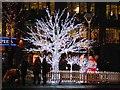 SJ8498 : Illuminated Tree, Piccadilly Gardens by David Dixon