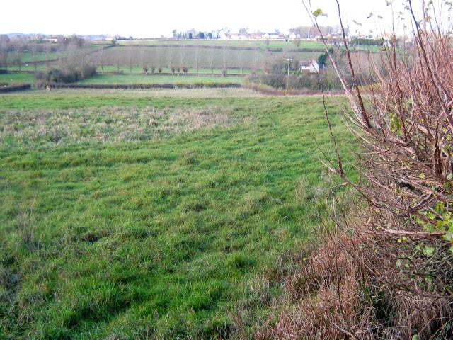 Field edge near Upton