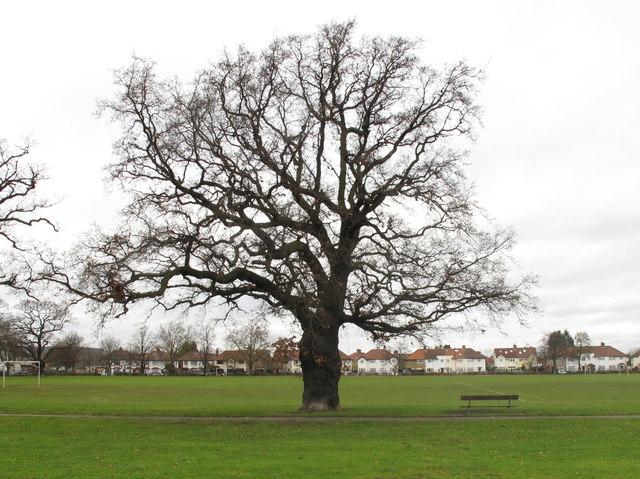 Leafless Oak Tree 169 David Hawgood Cc By Sa 2 0 Geograph