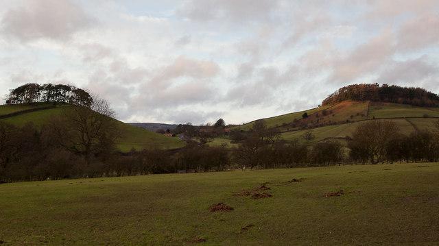 Hill Plantation and Bell Plantation