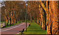 J2764 : The Wallace Park, Lisburn (7) by Albert Bridge