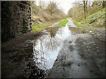 SJ9594 : Under Dowson Road by Gerald England