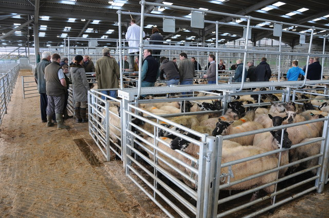 Sheep sales, Hereford Livestock Market