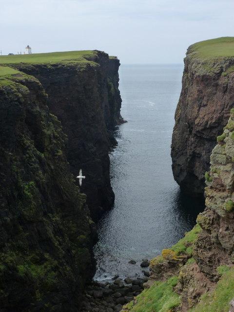 Eshaness: seagull in Calder's Geo