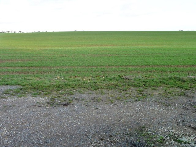 Large crop field east of the minor road