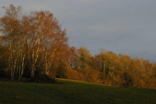 Wakehurst Place: over the southern boundary, late afternoon winter light