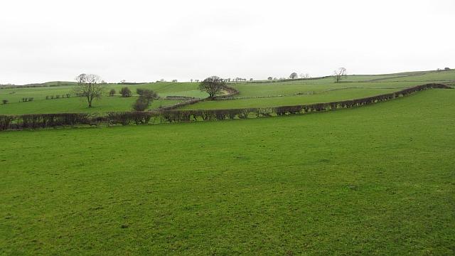 Grassland, Uldale