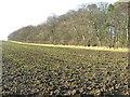 NT5884 : Blackdykes Strip by M J Richardson