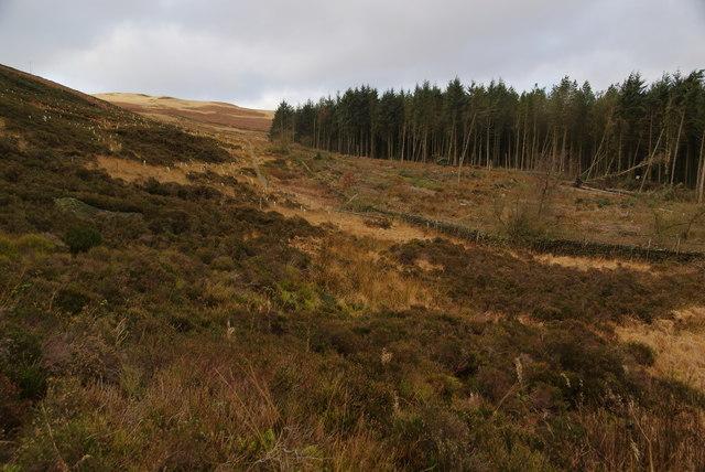 Forestry on Horrocks Moor