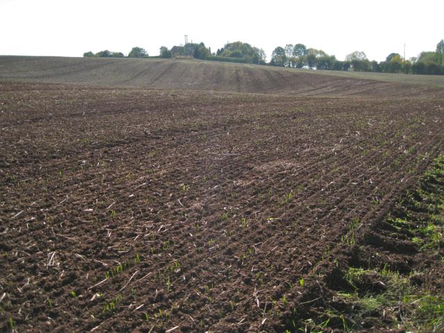 Crop emerging near Preston Hill Farm
