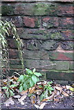 SX9193 : Benchmark on the wall of New North Road by Roger Templeman