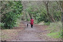 SS9712 : Tiverton : Old Railway Line Footpath by Lewis Clarke