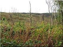 NS0129 : Clear felled area by Richard Webb
