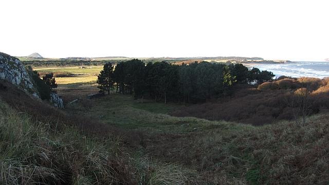 Woodland, Ravensheugh by Richard Webb