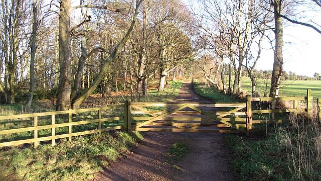 Track, Ravensheugh Woods by Richard Webb
