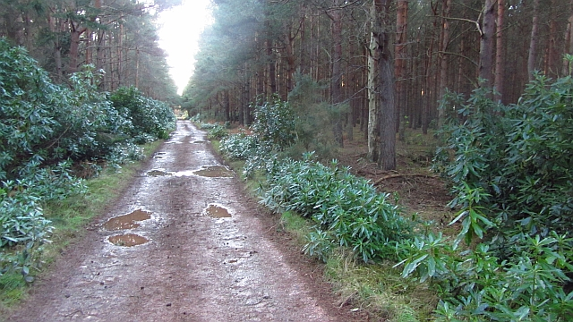 Long straight track, Brownrig Wood by Richard Webb