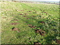 SU0320 : Molehills, Martin Down by Maigheach-gheal