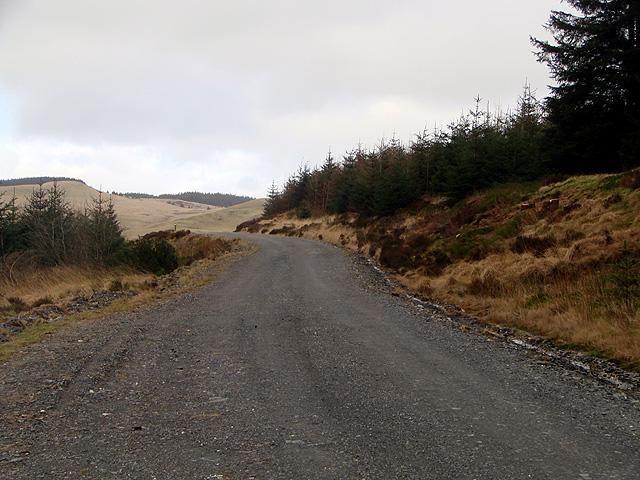 Forestry road by Bryn Gwyn - looking north