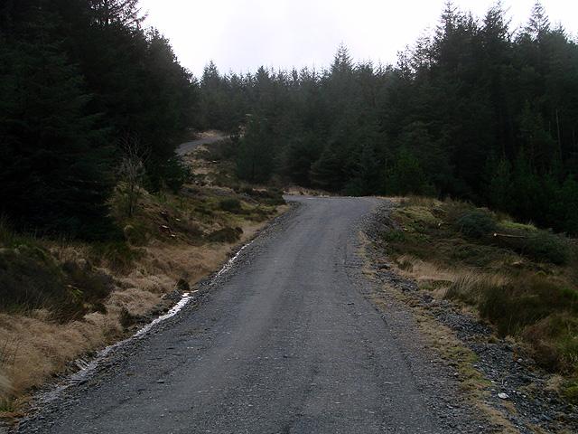 Forestry road by Bryn Gwyn - looking south