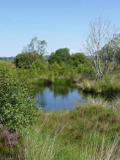 Pool on Cors Caron in July, Ceredigion