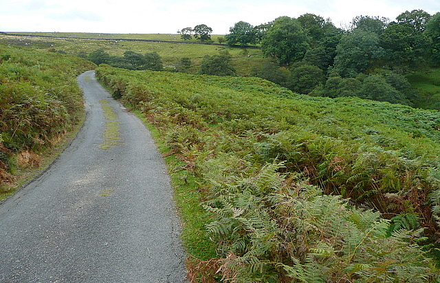 Lane to Partridge Hill