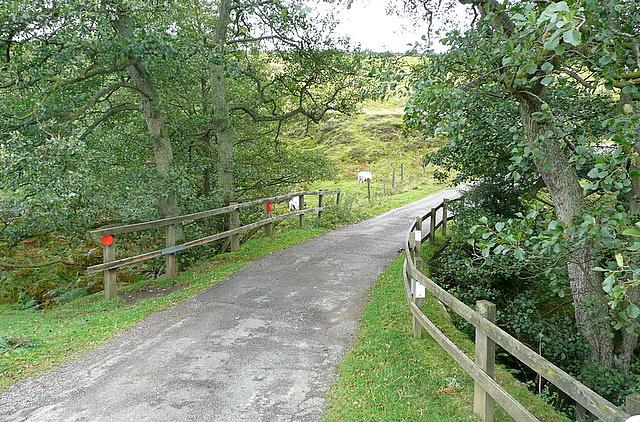 Lane to Partridge Hill
