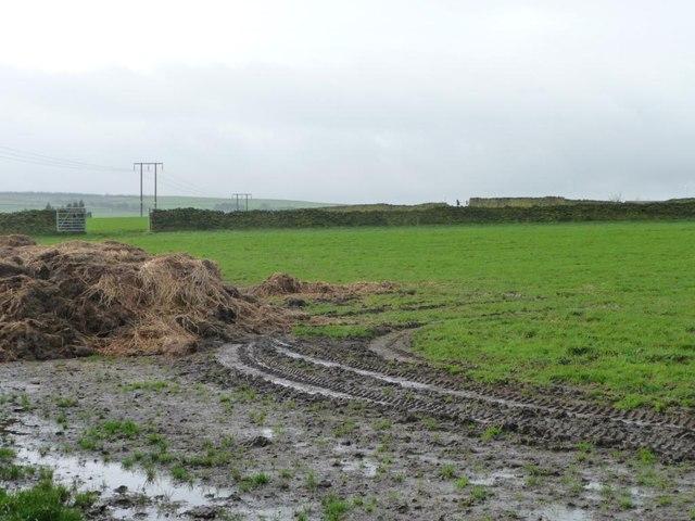 Muddy field bottom, Low Common