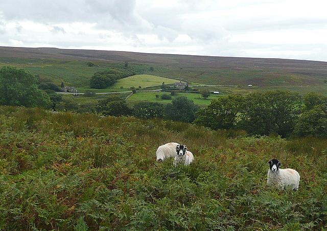 View towards Moorgates