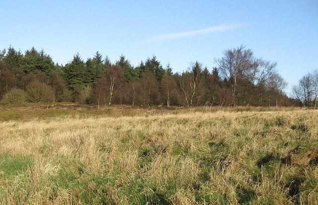Edge of Kilburn Moor Plantation