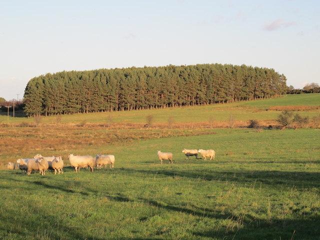 Farmland and plantation southwest of High Fotherley