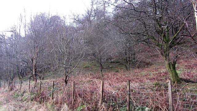 Rhu Wood