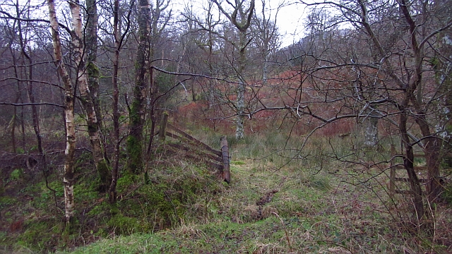 Stuckgown Woods