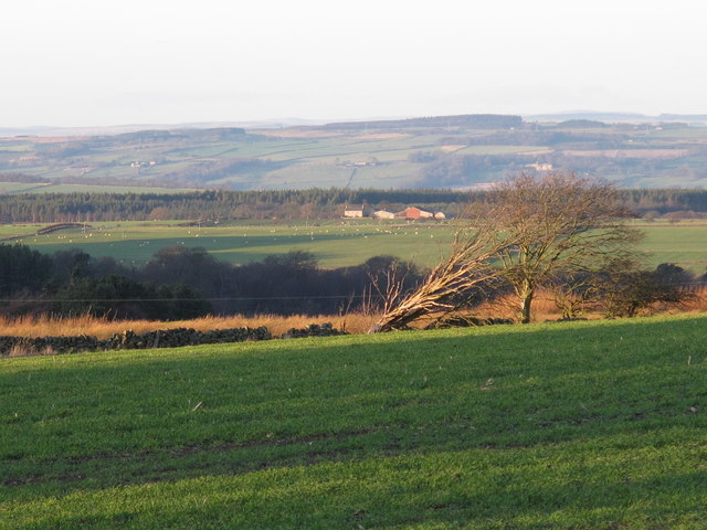 Farmland west of Kiln Pit Hill