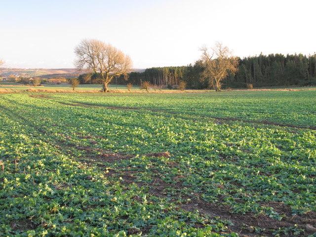 Farmland and woodland west of Unthank