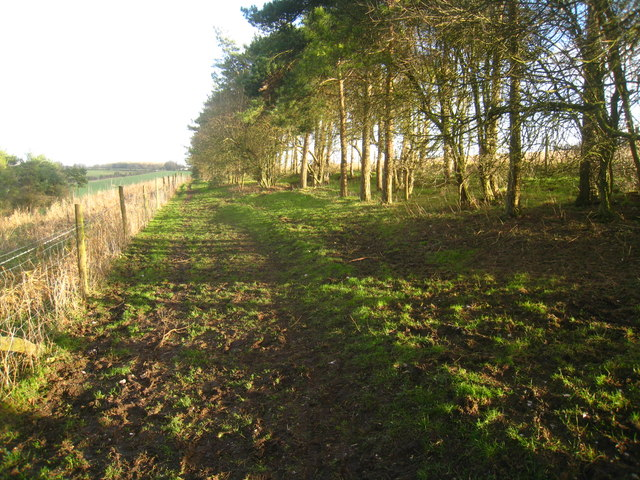 Path along the Hampshire Downs