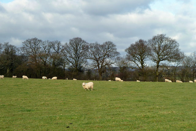Sheep, Mountjoy Farm