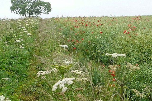 Arable land at Larkwhistle Farm