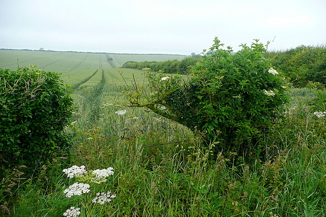 Arable land on Harley Hill