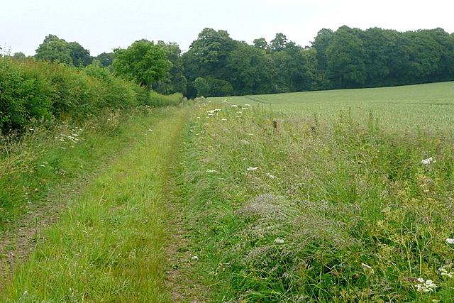 Footpath towards Avington