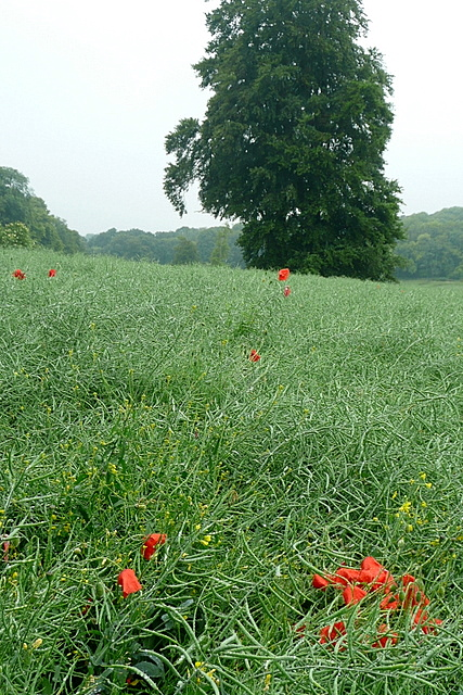 Arable land at Low Grounds