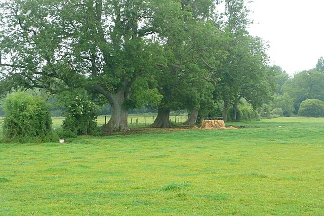 Pasture near Easton