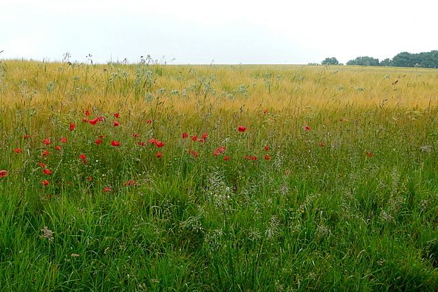 Field off Easton Lane