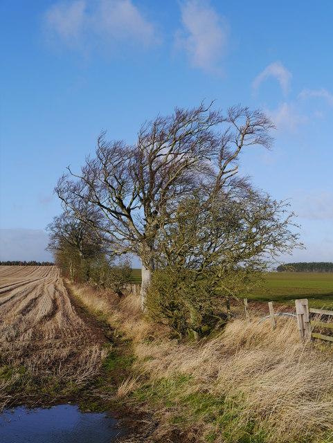 Winter Arable Land