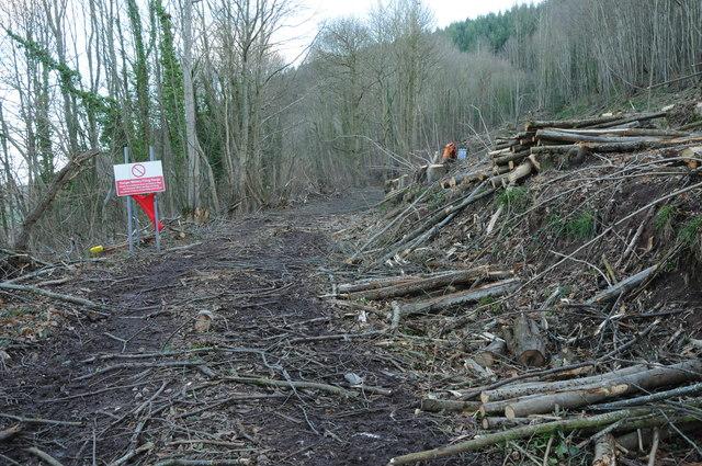 Forestry work in Penyard Park