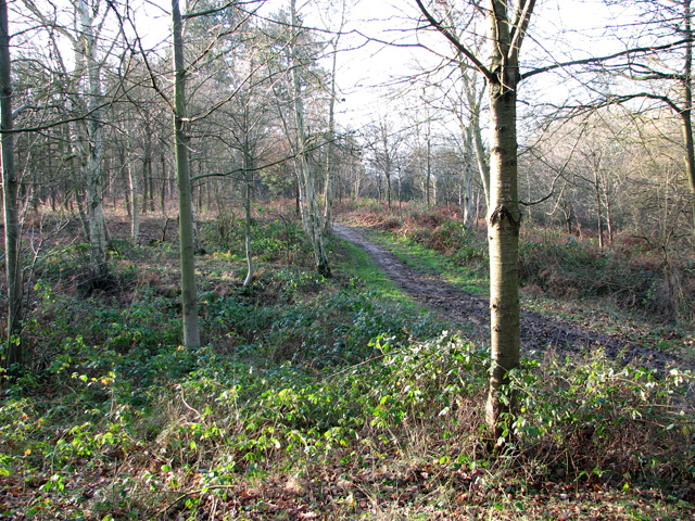 Narrow path through Holly Wood, Bentley