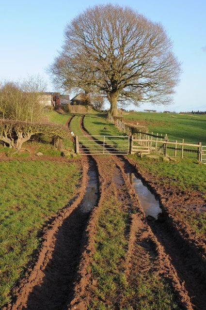 Muddy track, Lawns Farm