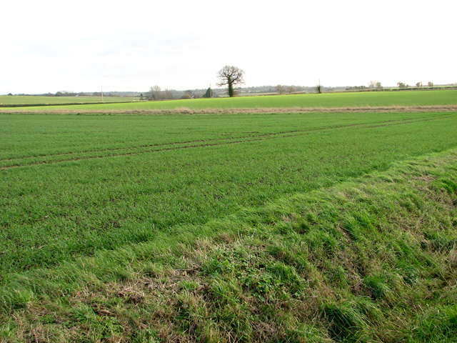 Cultivated fields south of Burstall Hall
