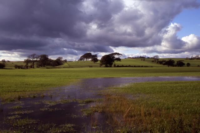 Grazing land near Whittington