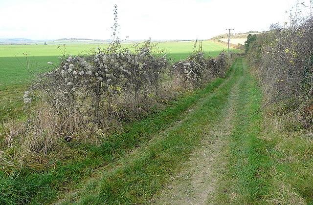 Bridleway towards Kingsclere