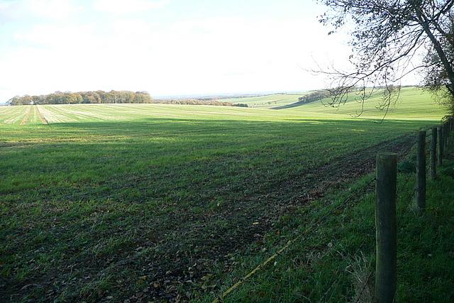 Farmland north of Gaston Wood